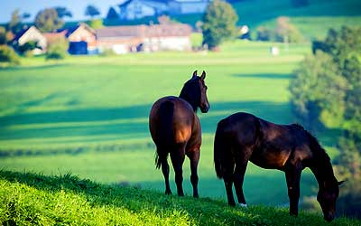 Somerset-KY-equine-property